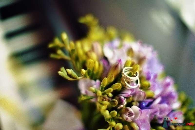 Фото 85063 в коллекции Наша счастливая свадьба - Хлоя