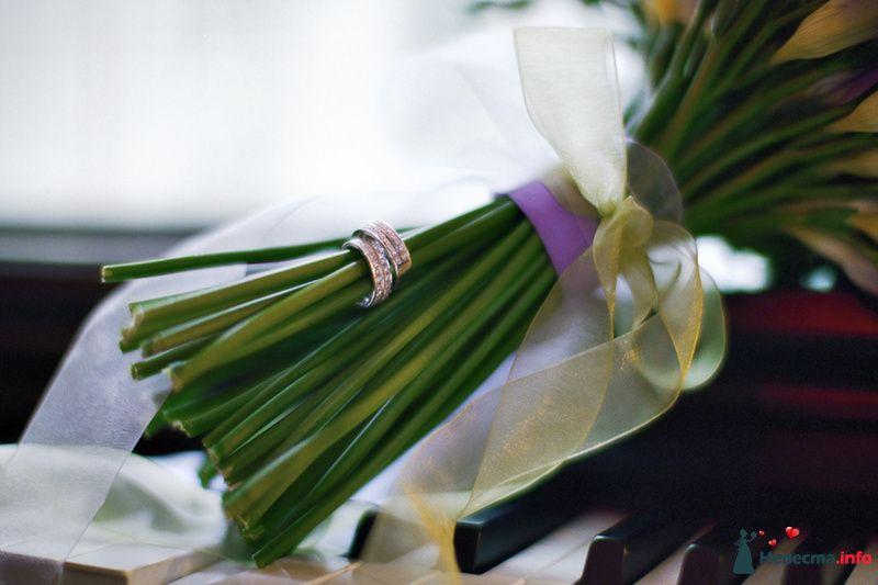 Фото 85064 в коллекции Наша счастливая свадьба - Хлоя