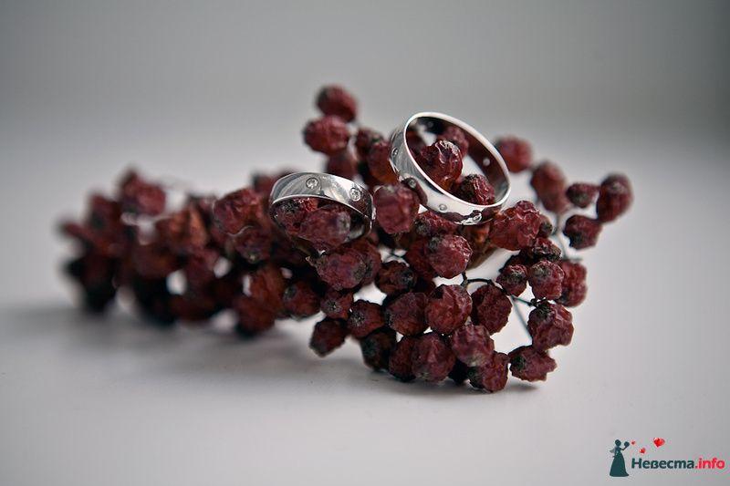 Обручальные кольца из белого золота на фоне высушенных ягод. - фото 130305 Фотограф Максим Кашляев