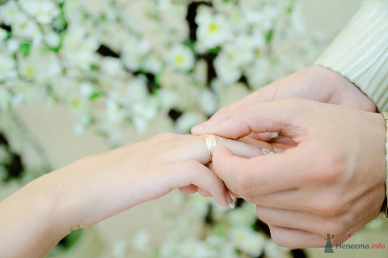 Фото 40350 в коллекции Wedding by Svetlana Alexseeva - Rainbow