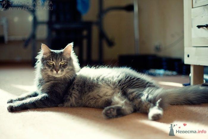 Фото 65646 - Фотограф Филонова Ольга