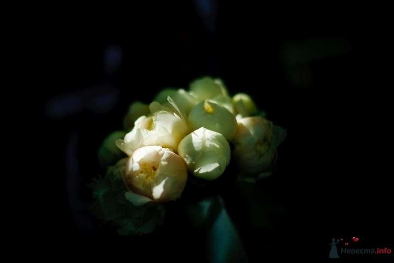 Фото 27724 в коллекции Мои фотографии - ЛюбовьК