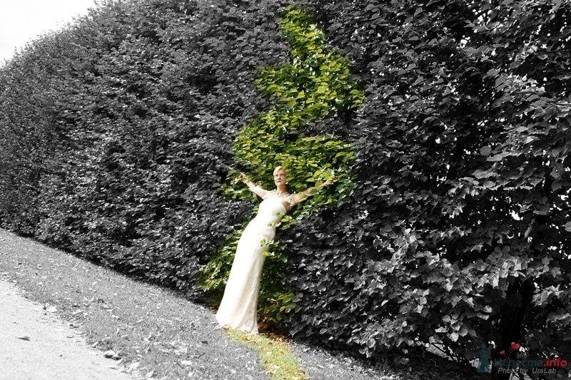 Фото 44359 в коллекции Мои работы  - Невеста01