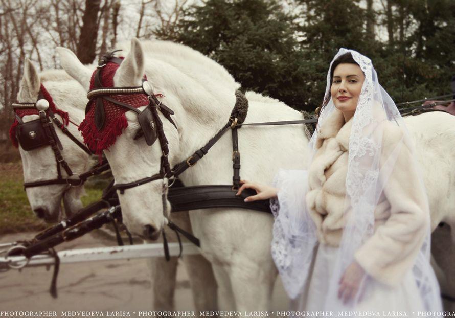 Фото 1961273 в коллекции Свадебное портфолио - Фотограф Лариса Медведева