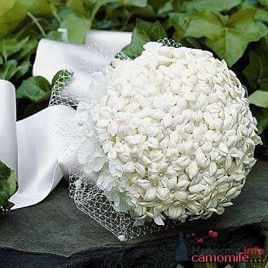 Фото 25317 в коллекции Flowers - YuBinLi