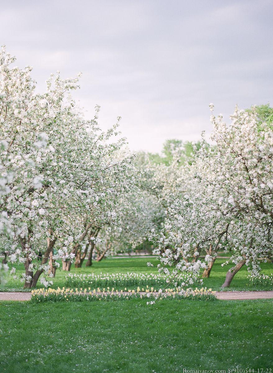 как оформить фото проекта в цвету яблонь залысины доставляют женщинам