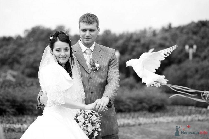 Жених и невеста стоят, прислонившись друг к другу, рядом летит белый голубь - фото 58683 monika