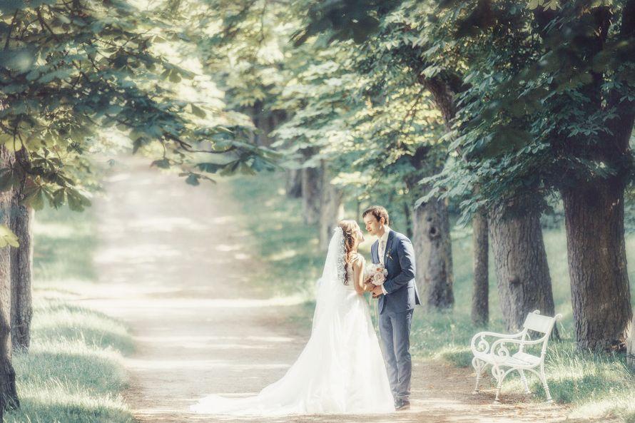 "Свадьба в замке Добриш - фото 12851492 ""Luxe svadba"" - свадьба в Чехии"