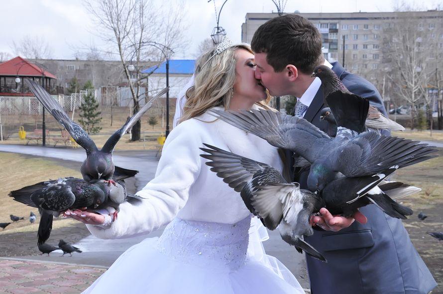 Свадебная фотография с голубями. - фото 2410189 Фотограф Светлана Герасименко