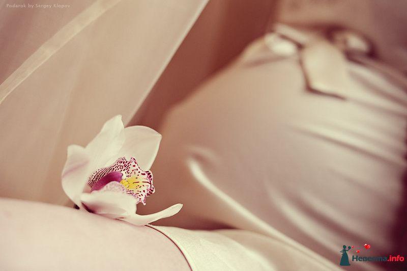 Фото 105540 в коллекции В ожидании малыша - Свадебный фотограф Сергей Клопов