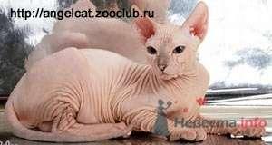 Котя, правда не мой((( - фото 37857 ОЛИК