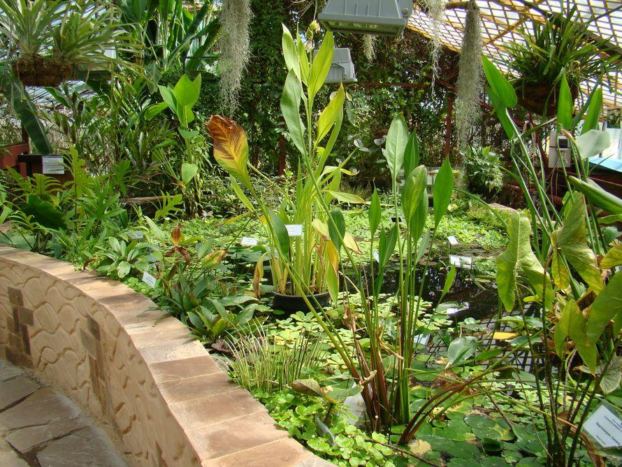 этот ботанический сад в иркутске фото сейчас счастью, владу