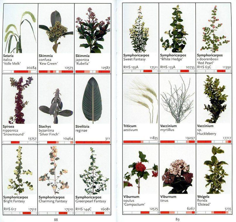 цветы срезка названия с картинками рязани