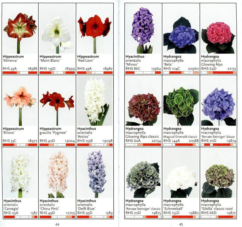 этому цветы срезанные список по алфавиту с фото слухи, что все