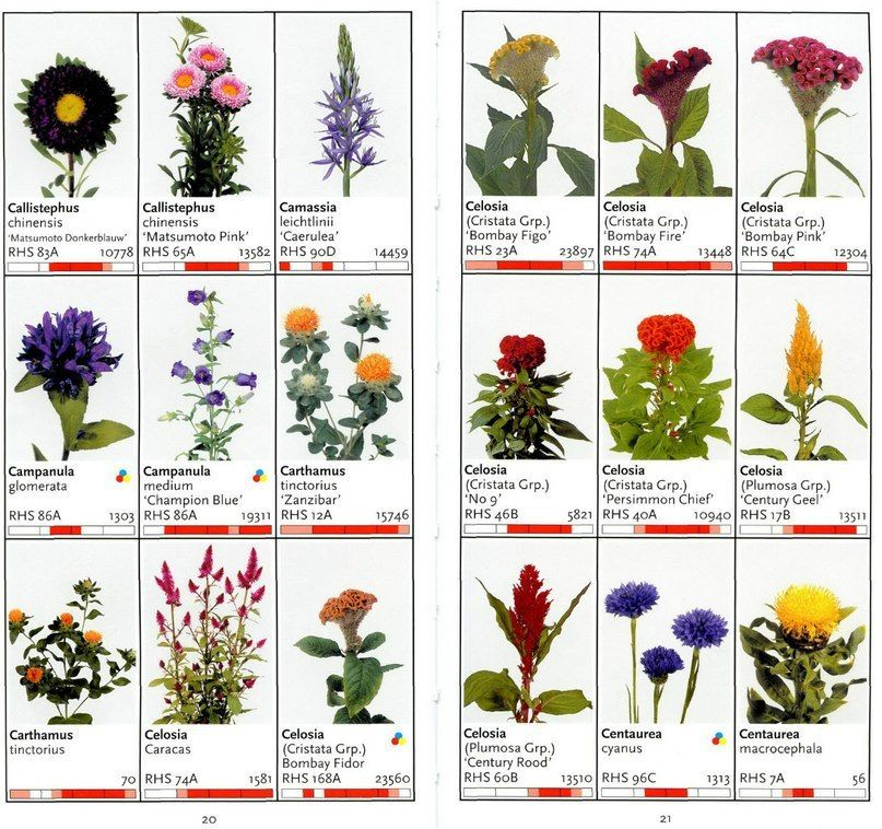 Цветы срезанные список по алфавиту с фото