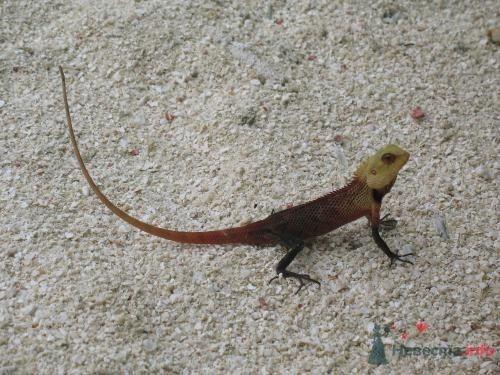 Фото 39744 в коллекции Медовый месяц на Мальдивах - Kitana