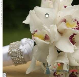 Фото 27241 в коллекции подготовка - Свадебные аксессуары by Оксана Karamelnaya