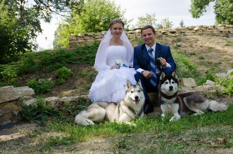 Фото 5474695 в коллекции Фото сессия с собаками - Праздничное агенство Event Art