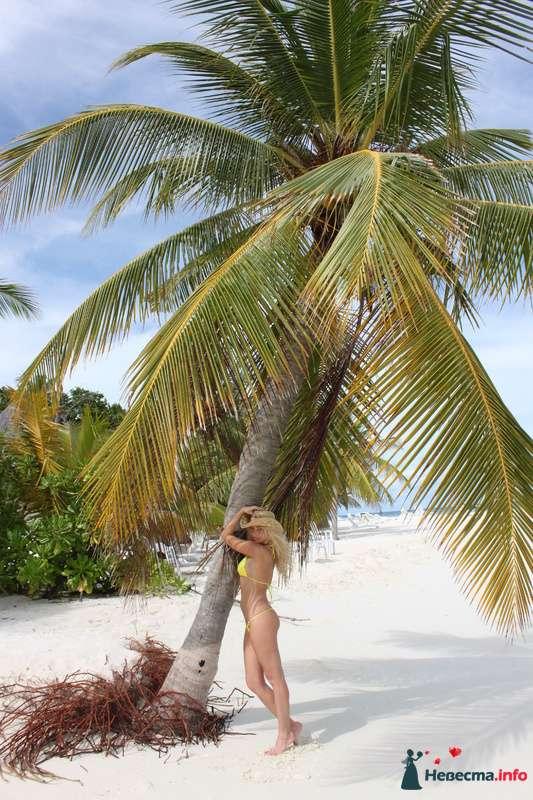 Фото 104325 в коллекции Мальдивы  -  идеальное место для медового месяца. - barbie