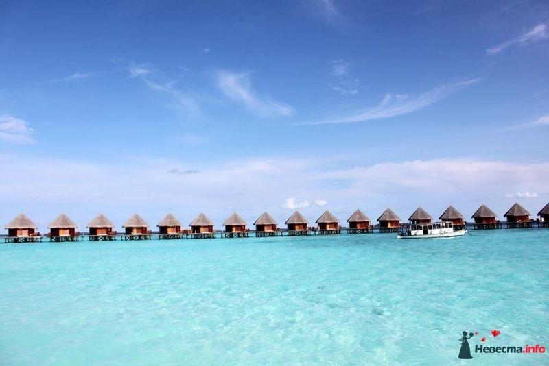 Фото 104335 в коллекции Мальдивы  -  идеальное место для медового месяца. - barbie