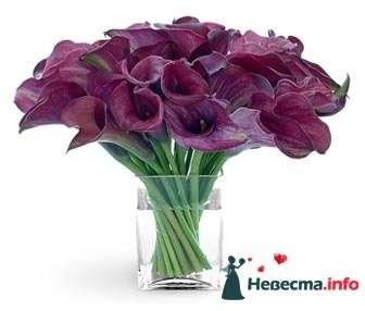 Фиолетовые каллы - фото 94384 Визажист-стилист свадебного образа Лариса Костина