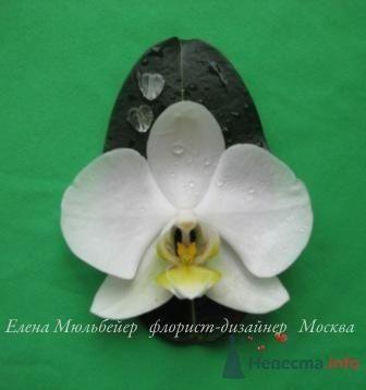 Бутоньерка из орхидеи - фото 30708 Цветочная мастерская Флорины