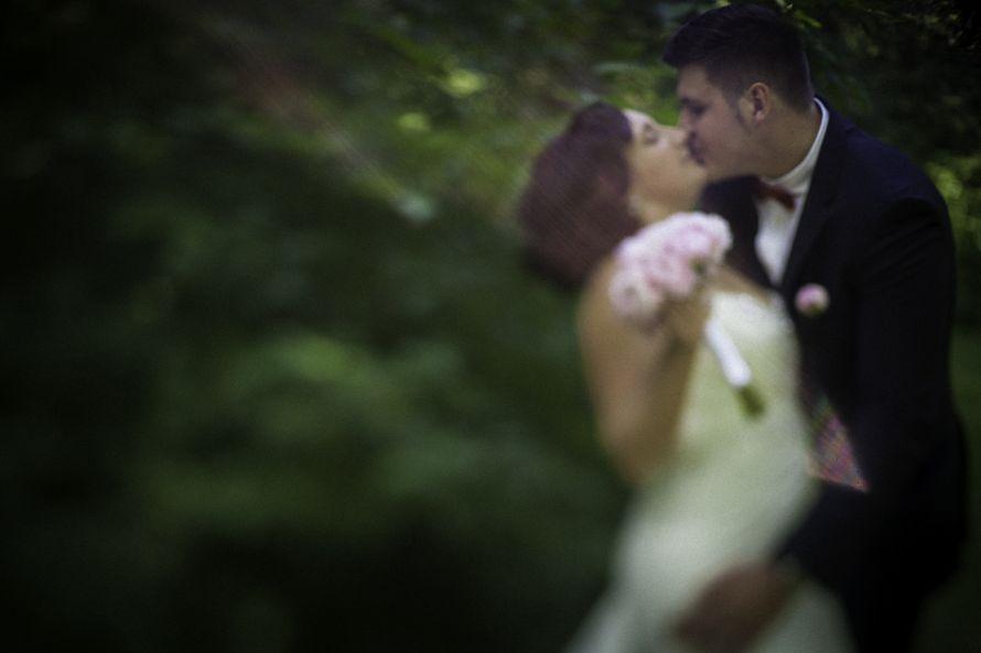 Фото 7287250 в коллекции Weddings - Imaginestudio - видеосъёмка
