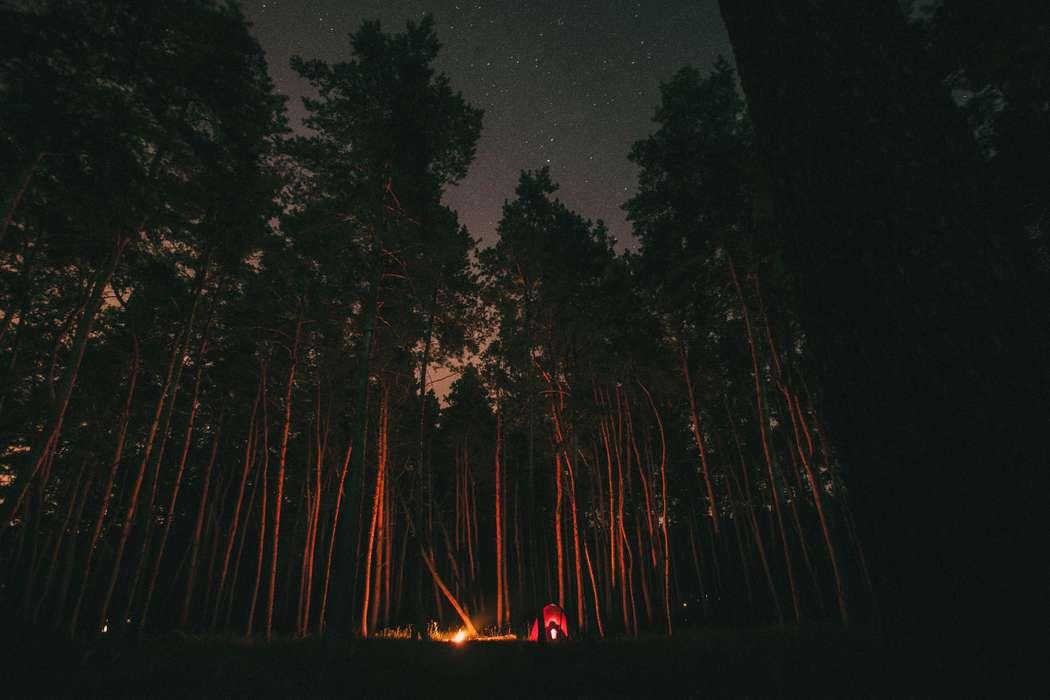 Фото 13906276 в коллекции Little Wood Story - Фотограф Антон Надточий