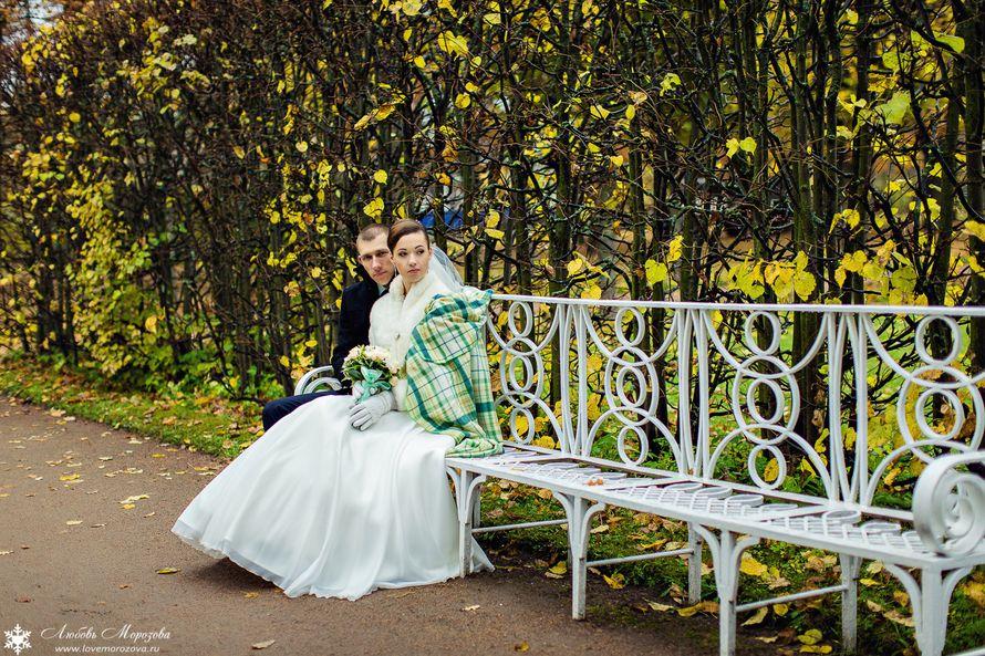 Фото 8558874 в коллекции Портфолио - Фотограф Любовь Морозова