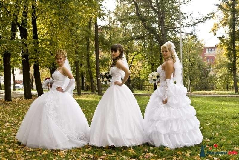 Фото 302196 в коллекции свадебное - Фотограф Алекс Сапожников