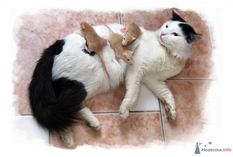 Раздаём  крысят в хорошие руки - фото 24577 Фотограф Ирина Бруй