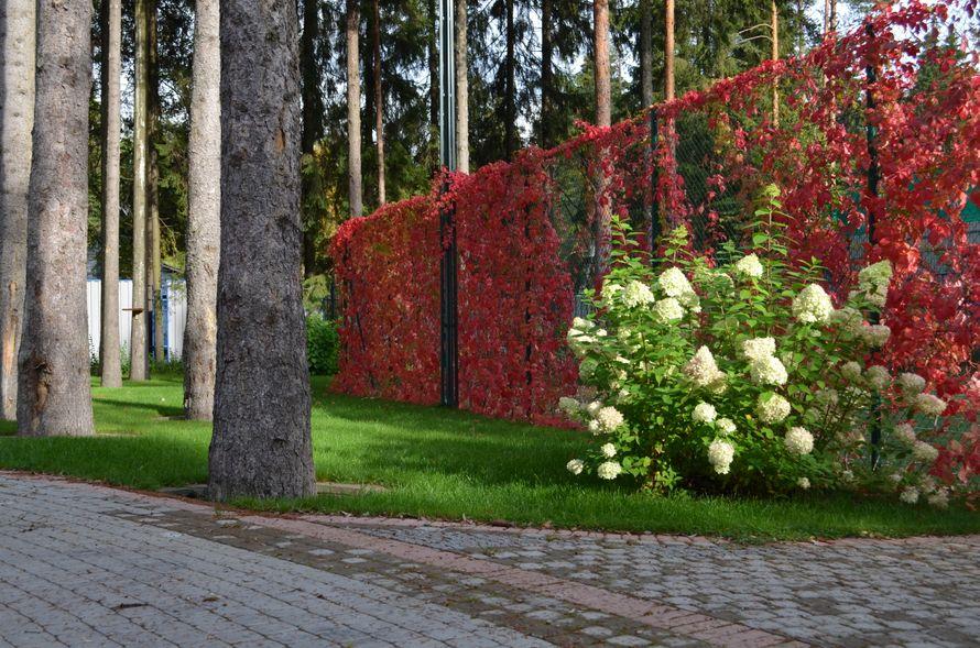 """Территория теннисного корта - фото 889103 Загородный отель """"Гальярда"""""""