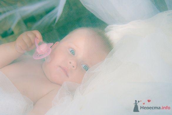 Фото 33138 в коллекции Семейная фотосъемка, LoveStory - Фотограф Снегирева Елена