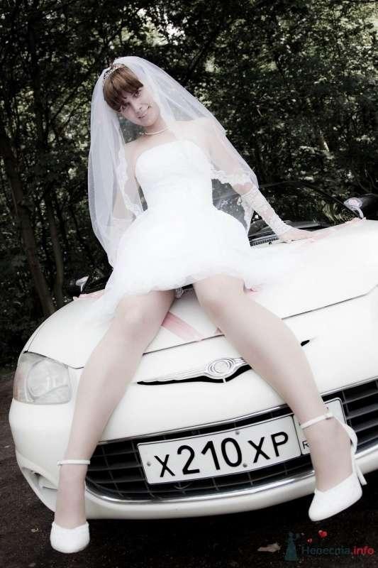 Фото 41174 в коллекции Мои фотографии - Lexandra