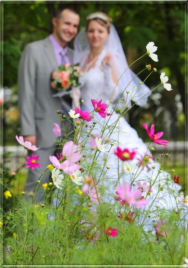 ехала свадебные фотографы петропавловск камчатский одна ярких