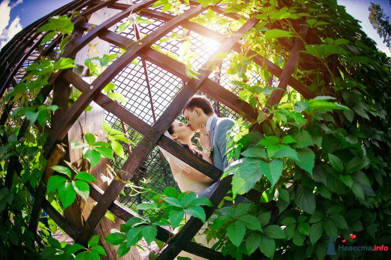 Фото 86620 в коллекции My wedding  - Багирочка  Мэри