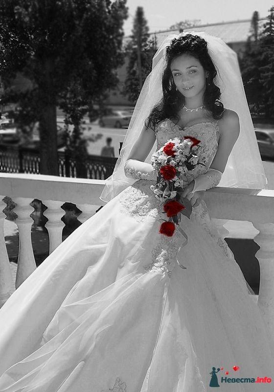 Фото 350207 в коллекции мои фото - Фотограф Владимир Пуцман