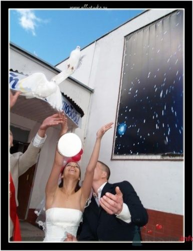 Фото 653 в коллекции Свадьба Паши и Насти - Студия фото и видеосъемки Aliya Pavrose