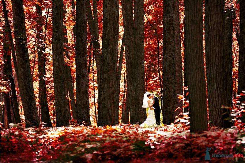 Фото 116018 в коллекции Портфолио - Свадебный фотограф Евгений Земцов