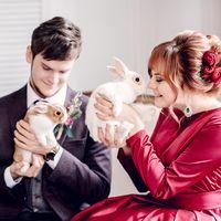 свадьба, красный, малиновый, кролики, бордовый, жених, невеста, фотосессия, свадебная фотосессия, фотограф, животные, фотосъемка с животными, фотосессия в студии, студия, студийная съемка