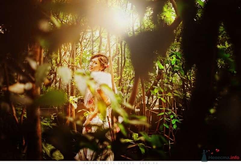 Фото 30898 в коллекции Новая свадебная фотография / Запорожец Сергей - Фотограф Запорожец Сергей