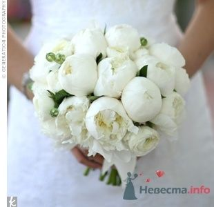 Фото 64767 в коллекции Свадебные штуки)