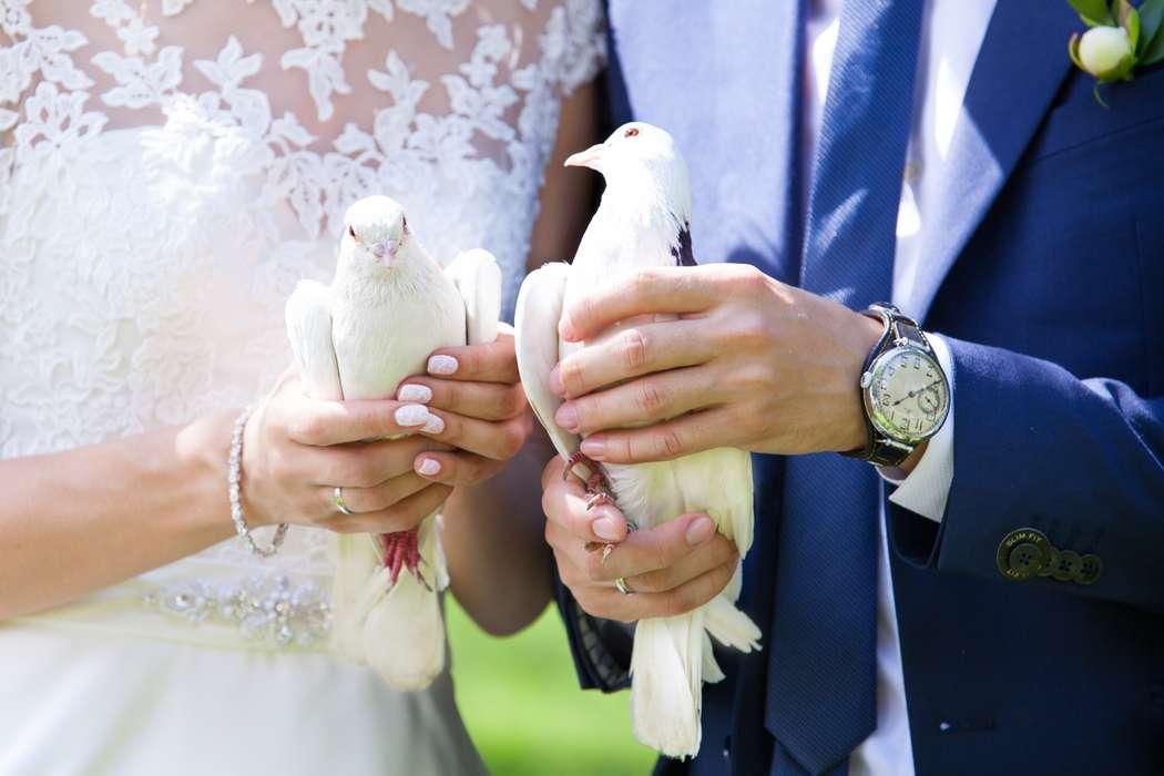 свадебные фото кольца голубей тезис пешеход