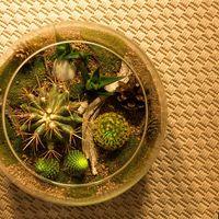 Флорариум Шар 22 см «Лес» с суккулентами (ваза 4 л, ⌀22 см)   #11