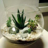 Флорариум-шар «Море» с суккулентами (4л, d=22сm)   #8