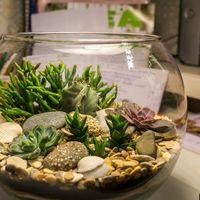 Флорариум Шар 22 см «Море» с суккулентами (ваза 4 л, ⌀22 см)   #14