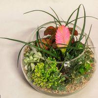 Шар 25 см «Тропический лес» с тилландсией (ваза 7,5 л, ⌀25 см)   #26
