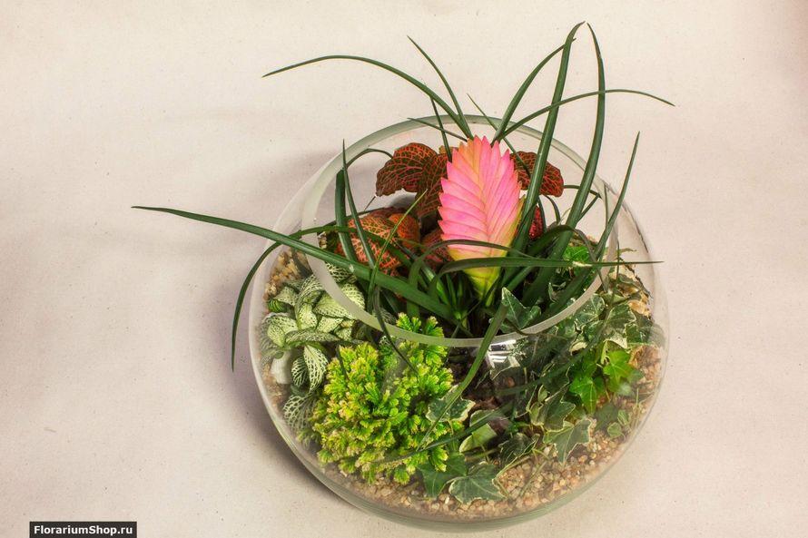 Шар 25 см «Тропический лес» с тилландсией (ваза 7,5 л, ⌀25 см)   #26 - фото 9450268 Мастерская флорариумов Юлии Шумилкиной
