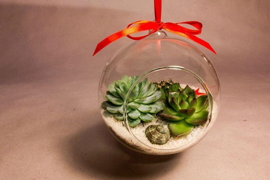 Подвесной шар 12 см с суккулентами #25   - фото 9450278 Мастерская флорариумов Юлии Шумилкиной