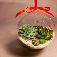 Мини-флорариум «Море», подвесной шар 12 см